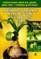 Indiškasis svogūnas, auksinis ūsas ir kiti gydomieji augalai