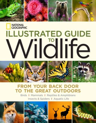 National Geographic Illustrated Guide to Wildlife