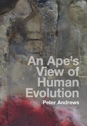 Ape's View of Human Evolution