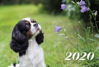 2020 m. sieninis kalendorius (šuo)
