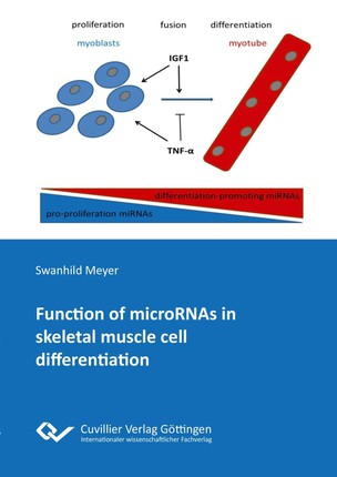 Function of microRNAs in skeletal muscle cell differentiation